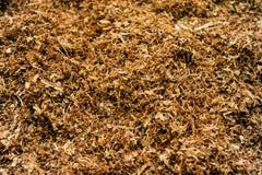 Produzione dell'industria del tabacco Fotografia Stock
