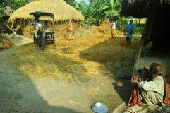 Produzione della risaia fotografia stock libera da diritti