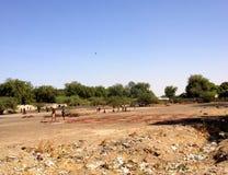 Produzione di cuoio a N'Djamena, Repubblica del Chad Immagine Stock