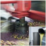 Produzione di petrolio di olio d'oliva Immagini Stock