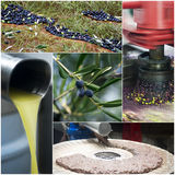 Produzione di petrolio di olio d'oliva Immagine Stock