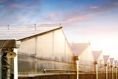 Produzione di plastica della serra delle verdure Immagini Stock Libere da Diritti
