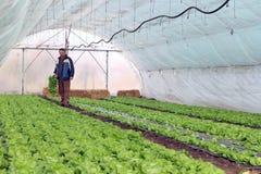 Produzione di verdure della serra Fotografie Stock Libere da Diritti