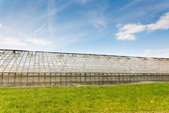 Produzione di verdure della serra Immagini Stock