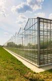 Produzione di verdure della serra Immagini Stock Libere da Diritti