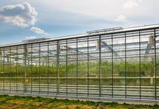 Produzione di verdure della serra Immagine Stock Libera da Diritti