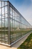 Produzione di verdure della serra Fotografia Stock