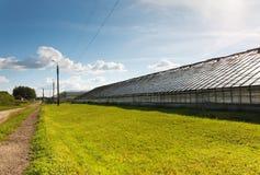 Produzione di verdure della serra Fotografia Stock Libera da Diritti