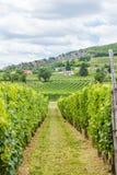 Produzione industriale dell'uva Fotografie Stock