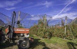 Produzione intensiva o frutteto della frutta con le reti di difesa delle colture nel Tirolo del sud, Italia Meleto di varietà fotografia stock libera da diritti