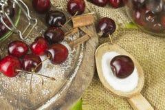 Produzione nazionale della marmellata di amarene Ciliege di recente selezionate pronte per inscatolare Immagini Stock Libere da Diritti