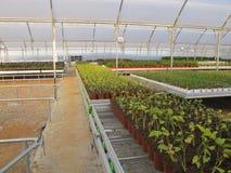 Produzione vegetale della serra Immagine Stock