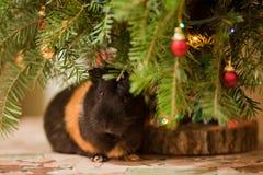 Proefkonijn bij Kerstboom stock fotografie