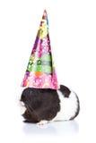 Proefkonijn dat een partijhoed draagt Stock Fotografie