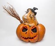 Proefkonijn in een pompoen voor Halloween stock foto's