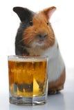 Proefkonijn en bier Stock Foto