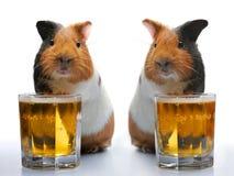 Proefkonijn en bier Stock Foto's