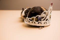 Proefkonijn met het zilveren diadeem royalty-vrije stock afbeelding
