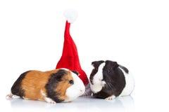Proefkonijnen en een Kerstmishoed Stock Afbeeldingen
