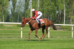 Profese in steeplechase in Lysa nad Labem Stock Photography