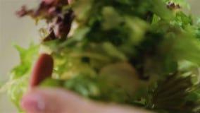 Profesional culinario que mezcla la ensalada verde por las manos, instrucciones de cocción del paso almacen de video