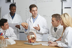 Profesor With Model Of Brain In Biology Class Fotos de archivo libres de regalías