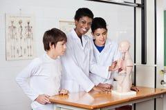Profesor With Students And In Lab modelo anatómico Imagen de archivo libre de regalías