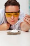Professeur démontrant l'expérience chimique simple Images stock