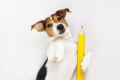 Professeur de chien Image stock