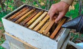 Profession of beekeeping Stock Photos