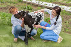 Profession of  veterinarian Stock Images