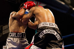 Professional and Amateur Boxing. Two young male professional boxers fight in Phoenix, Arizona, USA, at the Celebrity Theatre, November 30, 2012. Pro and amateur royalty free stock photos