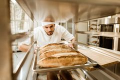 Professional baker putting trays of fresh bread on stand. At baking manufacture royalty free stock image