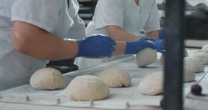 Professional bakers making from dough pieces for baking bread in a commercial bakery kitchen , working hands wearing stock footage