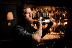 Professional bartender with a beard and tattoo on hands holding a steel shaker. On the bar counter in the blurred background of the bar shelves royalty free stock photography