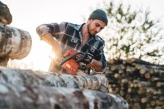 Professional bearded strong lumberman wearing plaid shirt sawing tree with chainsaw for work. On sawmill stock image