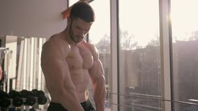 Professional bodybuilding, sports male keeps muscles in tension and looks at result of strength training at sports. Center near window in sunlight stock video footage