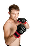 Professional boxer isolated on white background Stock Photography