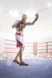 Professional boxer is training on the grand arena Royalty Free Stock Image