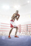 Professional boxer is training on the grand arena Royalty Free Stock Photo
