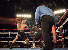 Professional Boxers In Matchup Stock Photography