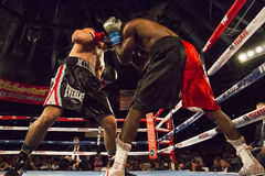 Professional Boxing in Phoenix, Arizona Royalty Free Stock Photos