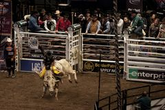 Professional Bull Rider tournament on Madison Square Garden royalty free stock image