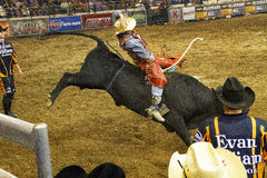 Professional Bull Riding Competition Royalty Free Stock Photos