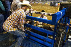 Professional Bull Riding Competition Stock Photography