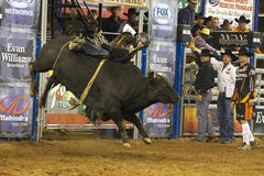 Professional Bull Riding Competition Royalty Free Stock Images