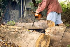 Professional chainsaw blade cutting log of wood. In forest Royalty Free Stock Image