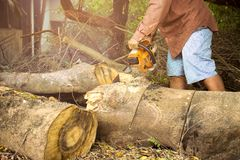 Professional chainsaw blade cutting log of wood. In forest Stock Image