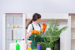 The professional cleaning contractor working at home. Professional cleaning contractor working at home Stock Image