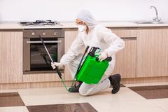 The professional contractor doing pest control at kitchen stock image